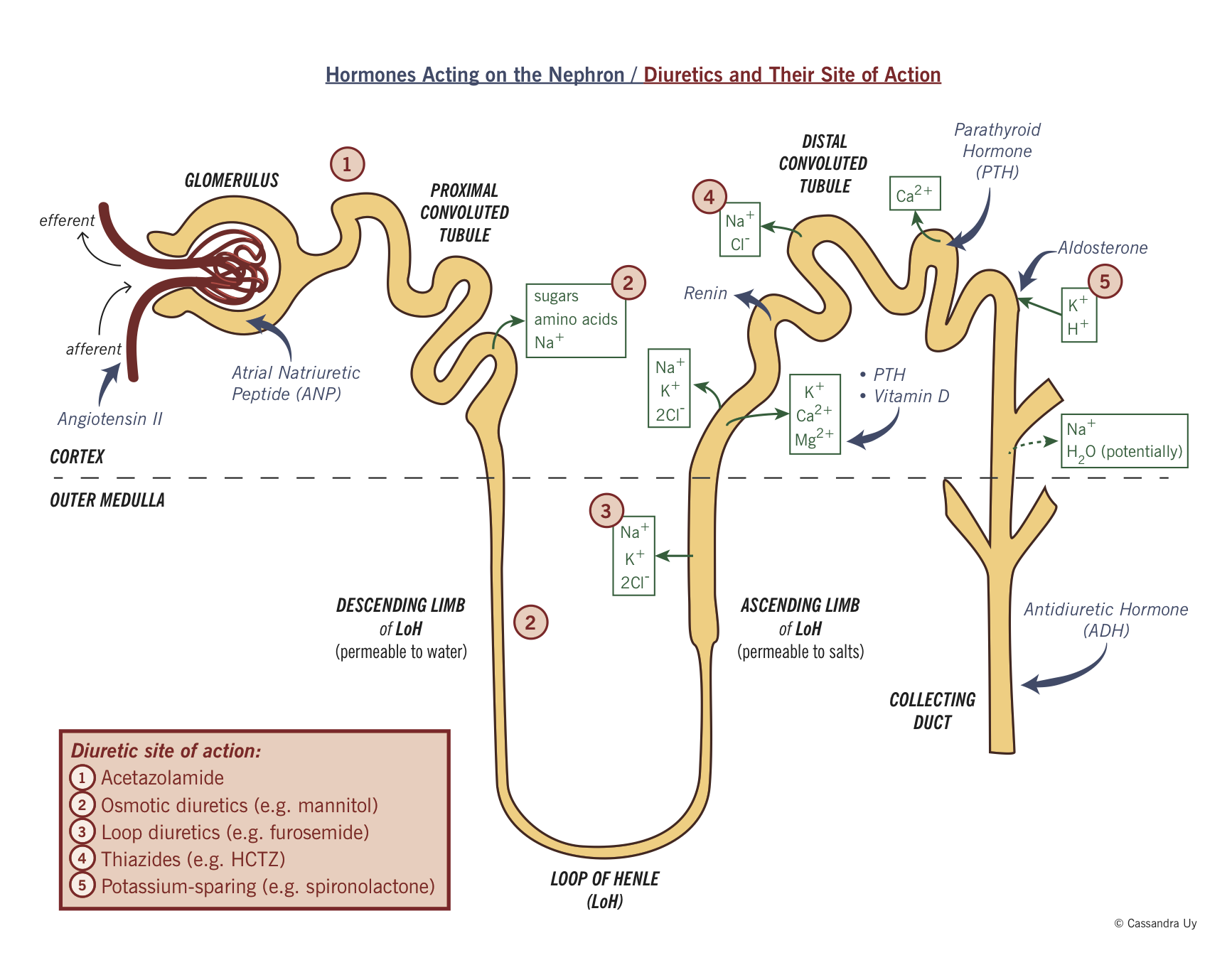 Renal Failure - LearnPICU